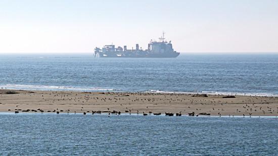 DSC00703-web-(zeehonden-op-zandsuppletie- bij noordzeekust)