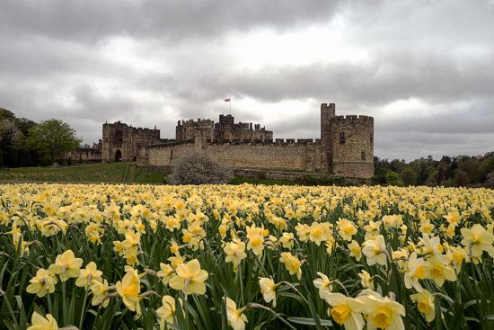 _DSC5564-web-(Alnwick-Castle-Noord-Engeland-2016)