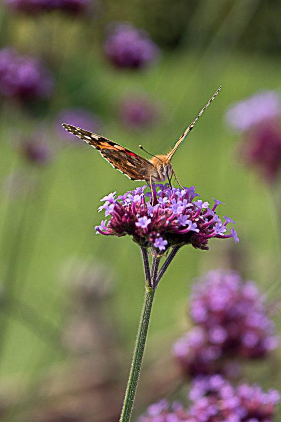 _DSC6342-web-(vlinder)