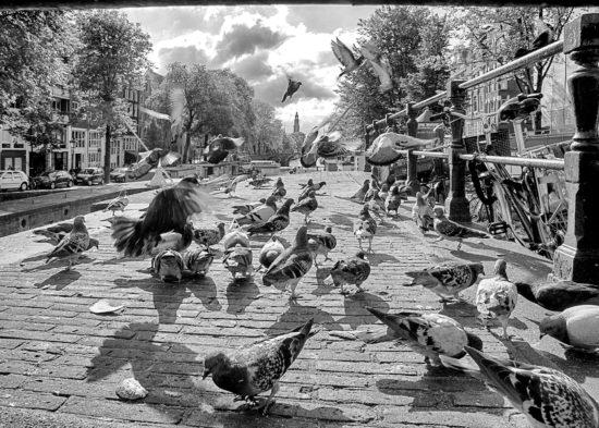 _dsc6633-duiven-sluiscomplex-adam-zwartwit