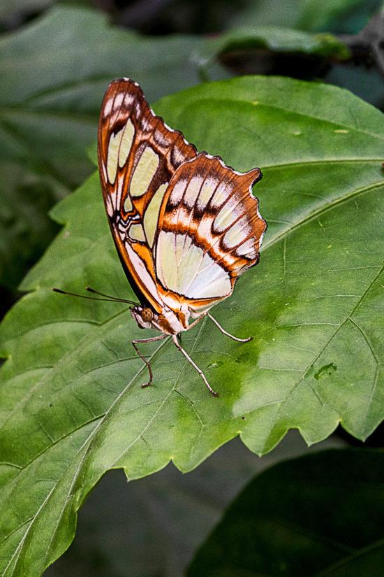 DSC02393-dierenportret-vlinder-web