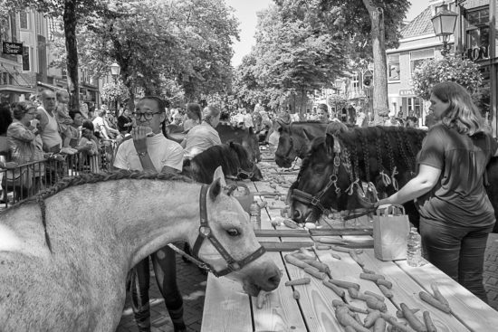 _DSC2353-Hoorn-Ponydag-17072019-zw-a-web